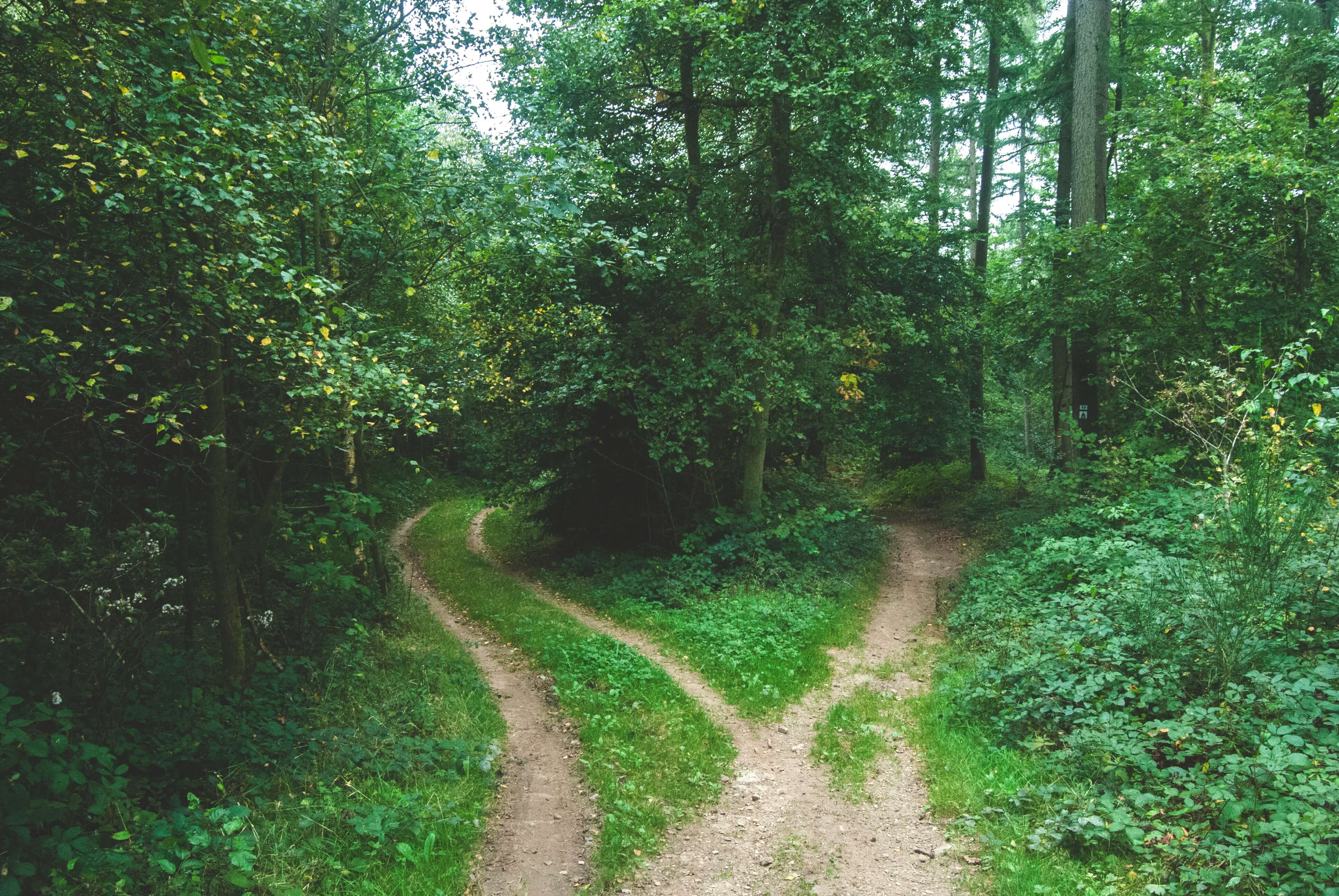 Diverging paths in the woods