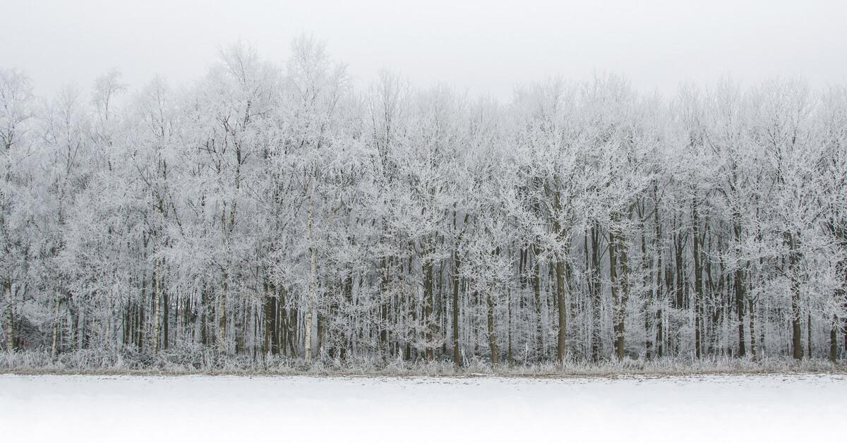 white-1185757_1920 (1).jpg